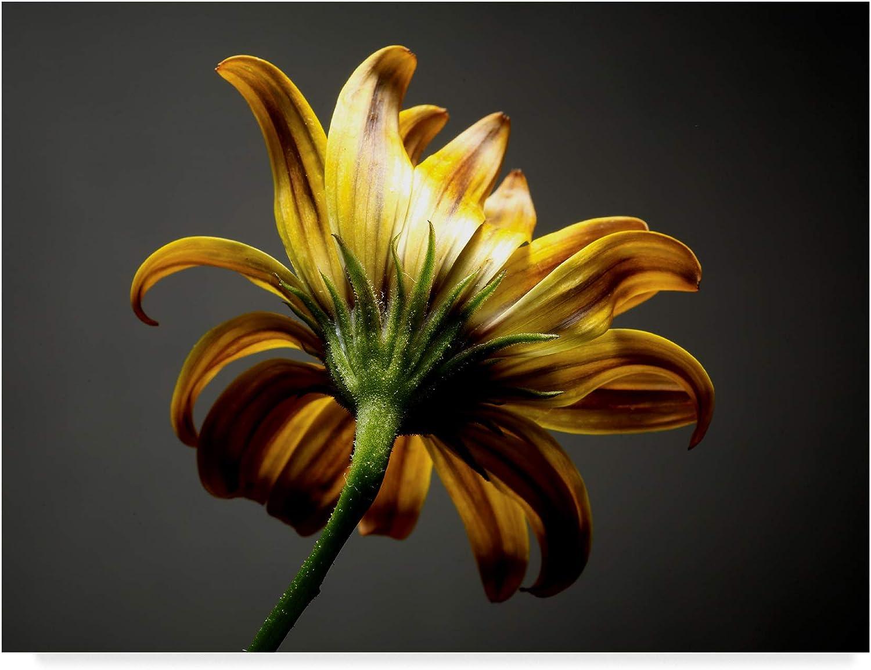 Trademark Fine Art Studio Flowers III by James Mcloughlin, 14x19