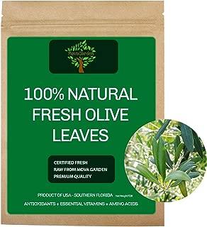 Best fresh olive leaves Reviews
