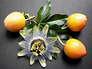 Golden Passion Fruit 100+ Qty pack seeds Passiflora Edulis