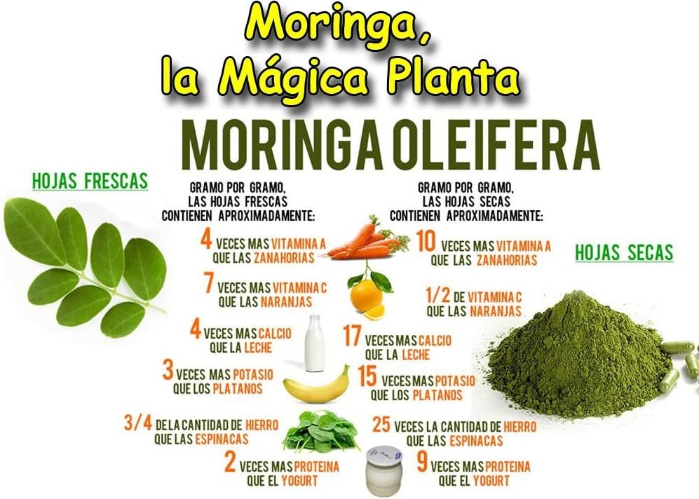 MORINGA OLEIFERA COMPLEX 4.000 mg. 2 x 60 Cáps. NATURE ...