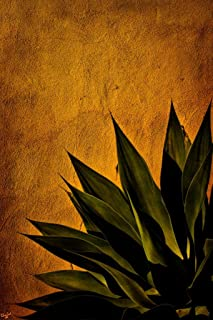 Agave On Adobe Sunset by Chris Lord Photo Photograph Cool Wall Decor Art Print Poster 24x36