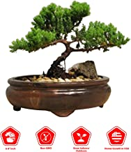 9GreenBox Bonsai Juniper Tree – Japanese Art Live House Plants for Indoor and..