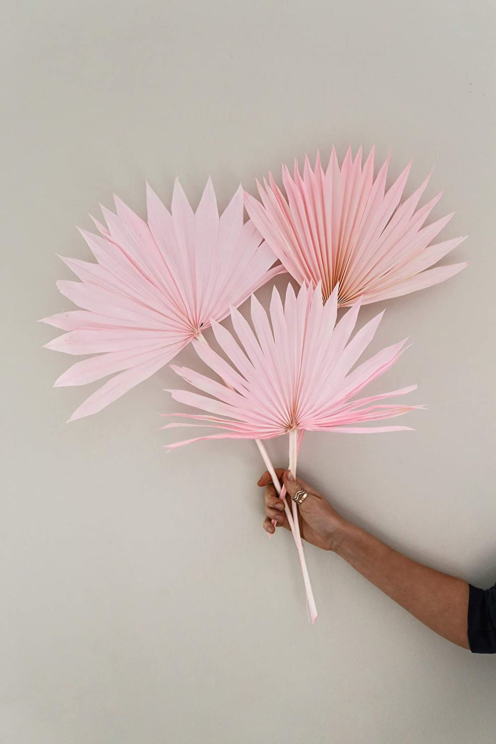 Natural Bleached or Pink Dried Palm Leaves 店舗 for 3pcs Tropi Decor 日時指定