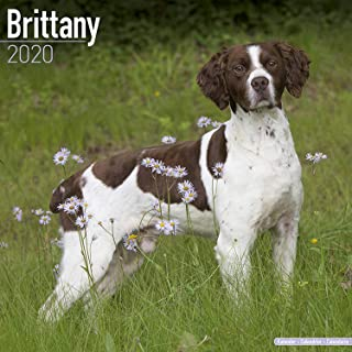 Best brittany spaniel christmas ornament Reviews
