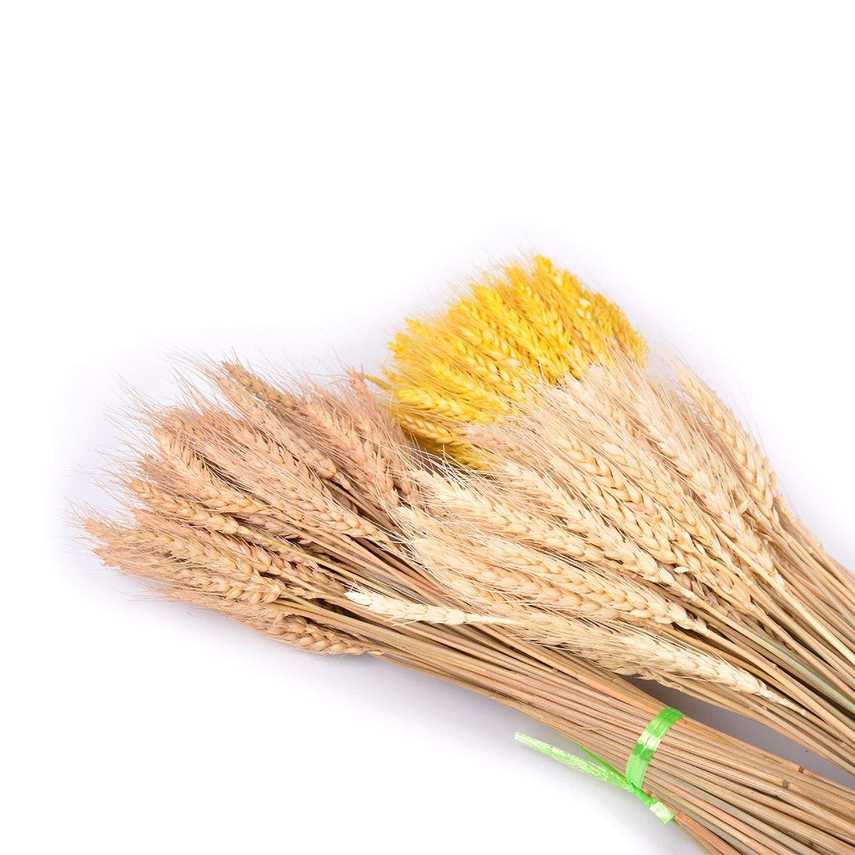 Coffee Acamifashion Colorful Fake Plants 50Pcs Dried Wheat Ear Flower Arrangement Wedding Holiday Party DIY Craft Decor