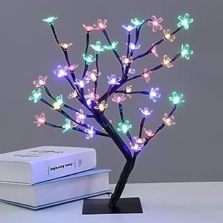 Best bonsai tree lifespan Reviews