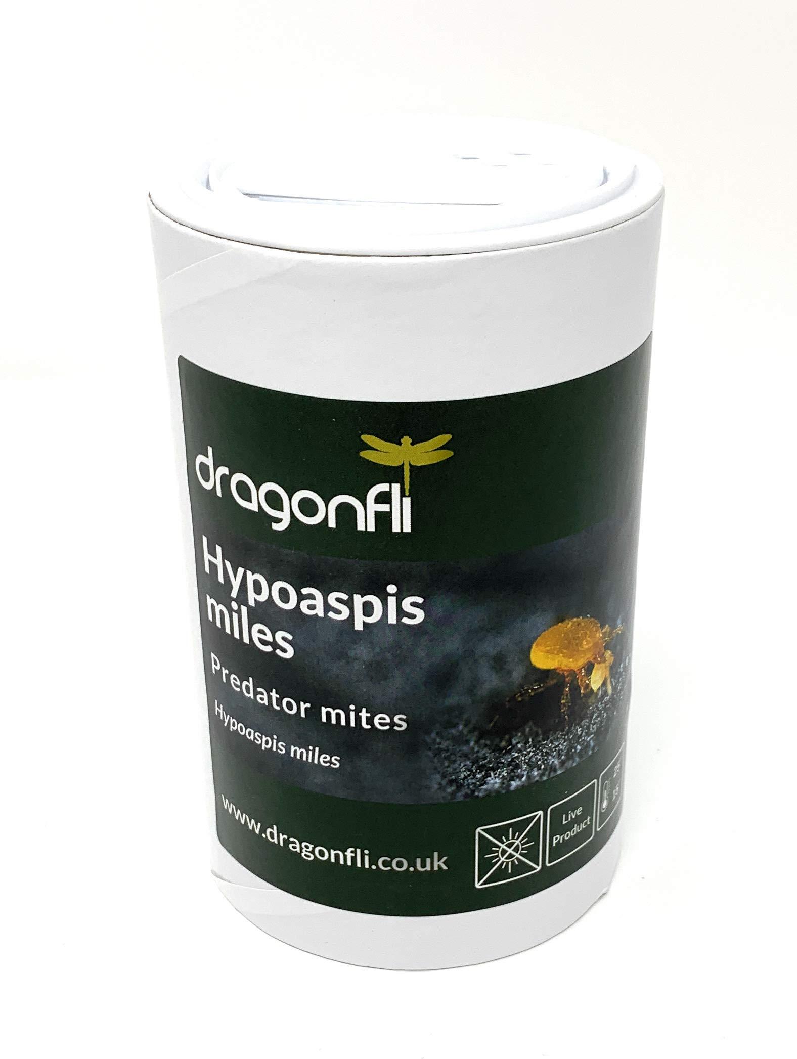 Dragonfli Hypoaspis Miles Predatory Mites - Kill Sciarid Fly/Fungus Fly Larvae & Thrip Pupae (2000)