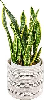 Best eco pot planter Reviews