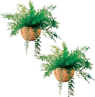 Best air fern plant Reviews