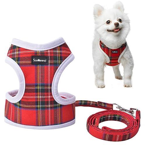 Chihuahua Small Dog Harness: Amazon.co.uk