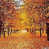 6 x 8 ft 1,8 x 2,4 m de Vinilo otoño otoño Arce Amarillo Hojas de árbol Foto Fondo