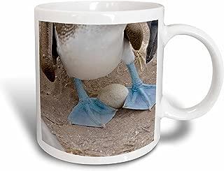 3dRose mug_187640_2 Ecuador, Galapagos, Espanola, Punta Suarez Blue-Footed Booby on Egg Ceramic Mug, 15-Ounce