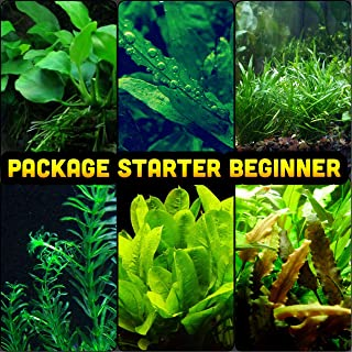 petco aquarium plants
