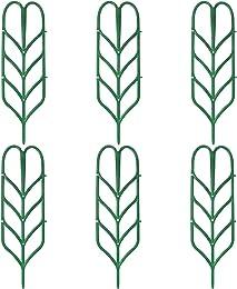 Best vines for trellises