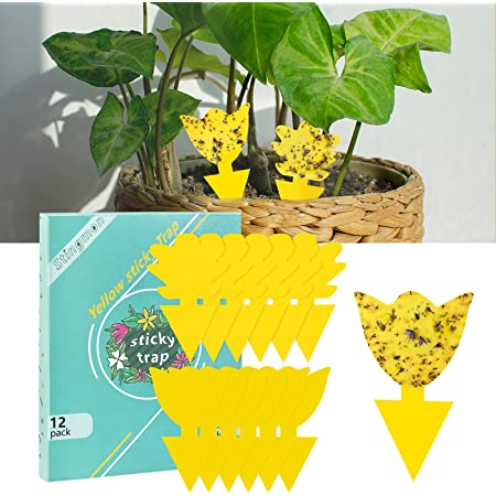 12 Pack Sticky Trap Fruit Fly and Fungus Gnat Traps Killer for Indoor and Outdoor,Protect The Plant,Non-Toxic and Odorless