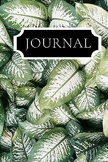 Best dieffenbachia plant images Reviews