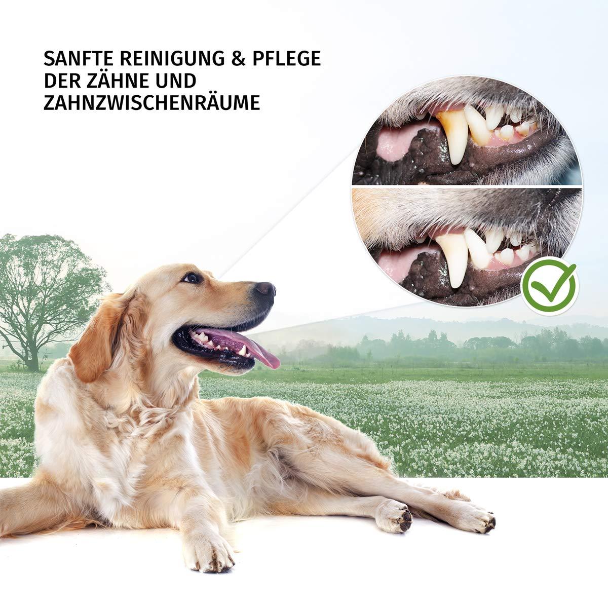 Original aniforte® Dental de pelota para perros y cachorros ...