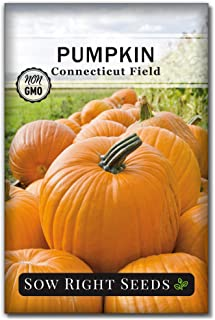 Sow Right Seeds - Connecticut Field Pumpkin Seed for Planting - Non-GMO Heirloom Packet with Instructions to Plant a Home ...