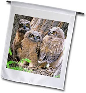 3dRose fl_90104_1 Great Horned Owlets, Bruneau Dunes State Park, Idaho US13 HGA0005 Garden Flag, 12 by 18""