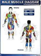 Productive Fitness Muscle Diagrams Poster Series Male and Female for Use At Home