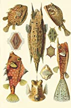 """Haeckel Scientific Biological Art Notebook: Vintage Science Illustrations N°42 from """"kunstformen Der Nature"""" / """"art Forms in Nature""""; Composition Journal with 120 Pages of Blank Graph Paper"""