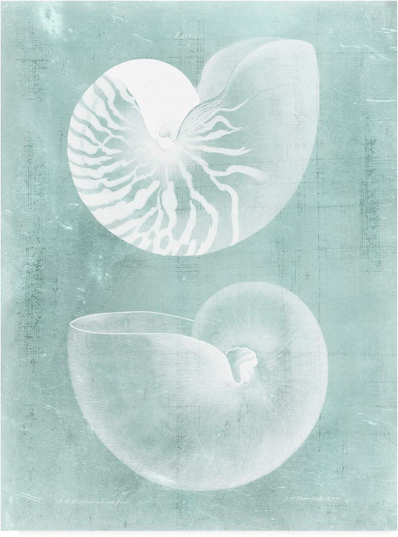 Trademark Fine Art Nautilus on Spa I by Vision Studio, 14x19