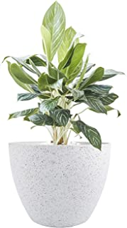 Large Planter Pots Indoor - Tree Planter 14.2 Inch Large Flower Pot Outdoor Planters Container Self-Watering Self-Aerating Planter with Drain Holes (Speckled White)