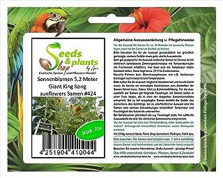 Stk - 25x Sonnenblumen 5,2 Meter Giant King Kong sunflowers Samen #424 - Seeds Plants Shop Samenbank Pfullingen Patrik Ipsa