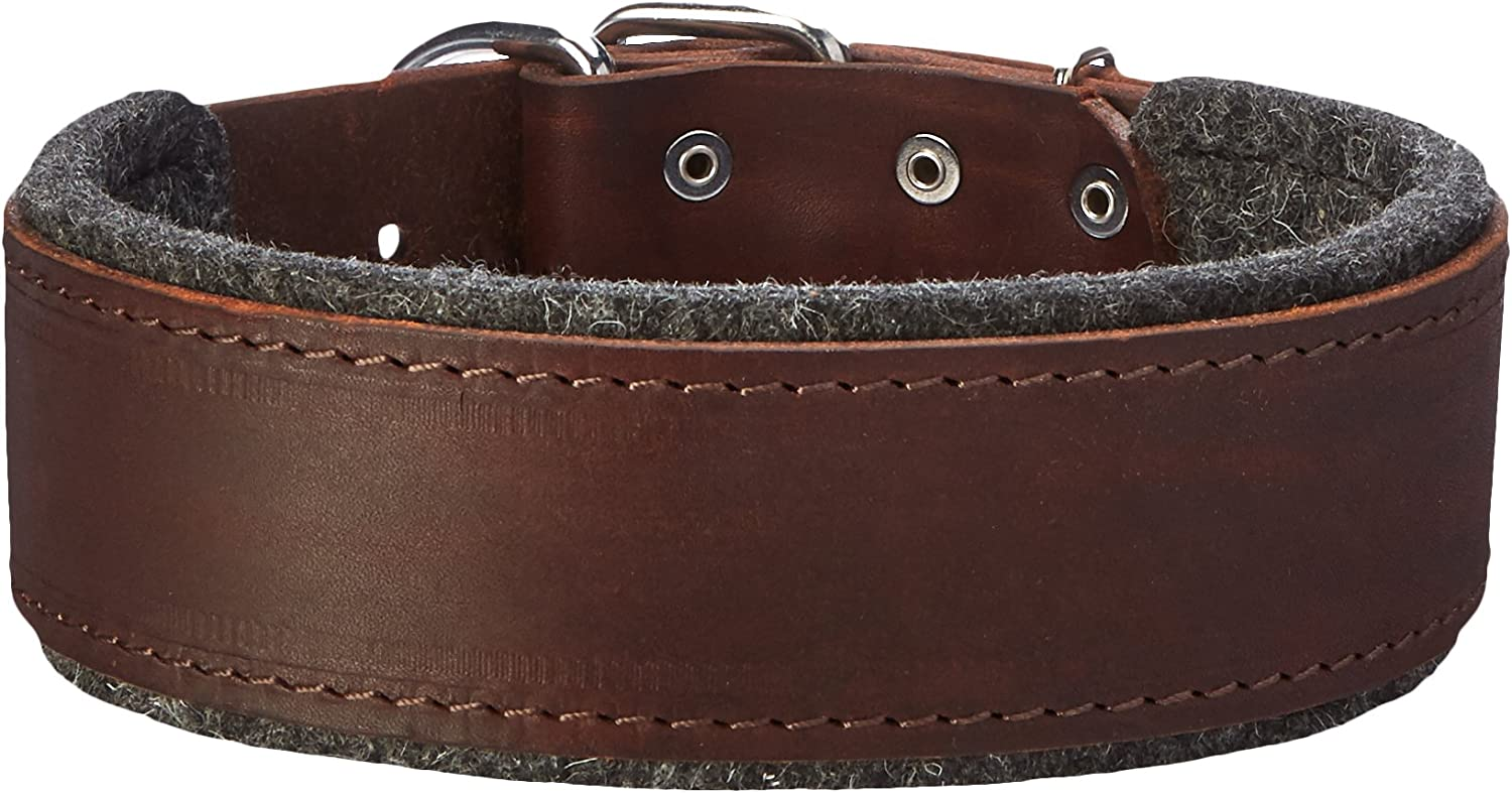 Dean and Tyler DT DELIGHT , Leather Dog Collar with Felt Padding and Strong Hardware  Brown  Size 20Inch by 2Inch  Fits Neck 18Inch to 22Inch