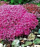 1 original pack, sun semi di fiori in vaso semi crisantemo facile da coltivare topinambur stagione lunga fioritura 50seed / pack