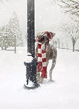 Avanti Tarjetas de Navidad, Frozen Greetings, 100 unidades