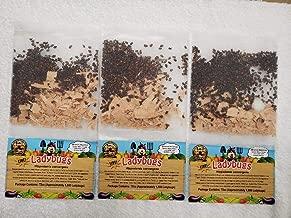 4,500 Live Ladybugs - Good Bugs - Guaranteed Live Delivery!