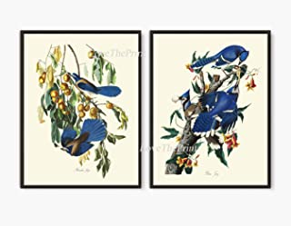 audubon blue jay print