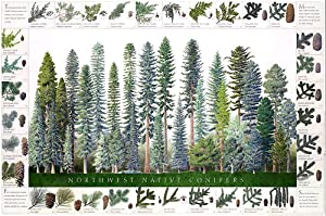 Northwest Native Conifers Poster and Identification Chart