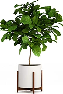 Best planters and plant stands Reviews