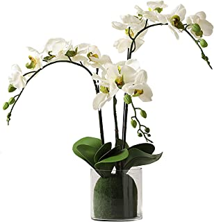 Best orchid in glass Reviews