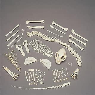 Cat Skeleton, Disarticulated