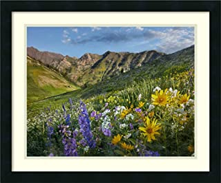 Framed Wall Art Print Larkspur and Sunflowers Albion Basin Wasatch Range Utah by Tim Fitzharris 26.00 x 21.50