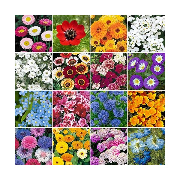 Wild Flower Premium Seed Mix No Grass Meadow Bees & Butterfly   100% Flowers