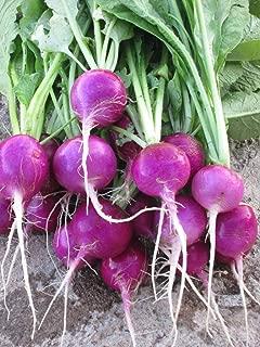 Purple Plum Radish Seeds, 150+ Premium Heirloom Seeds, Fun & Delicious!, (Isla's Garden Seeds), Non GMO Organic, 85-90% Germination Rates, Highest Quality Seeds, 100% Pure