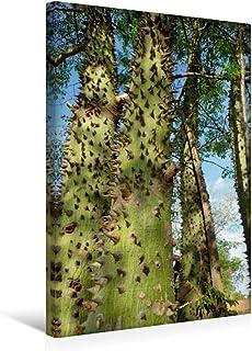 Premium - Lienzo textil (30 x 45 cm de alto, diseño del calendario imágenes del Chaco en Paraguay) CALVENDO Nature - Botella para niño