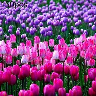 Uticon 150pcs Tulip Garden Semi Balcone Esterno Bonsai Profumo Fiore Perenne Pianta 150pcs Tulip Semi