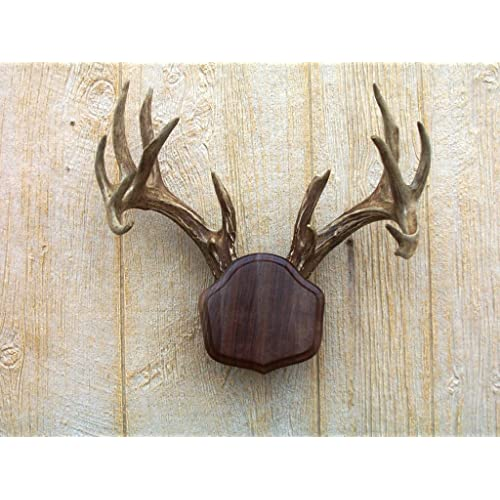 Deer Mounts: Amazon com