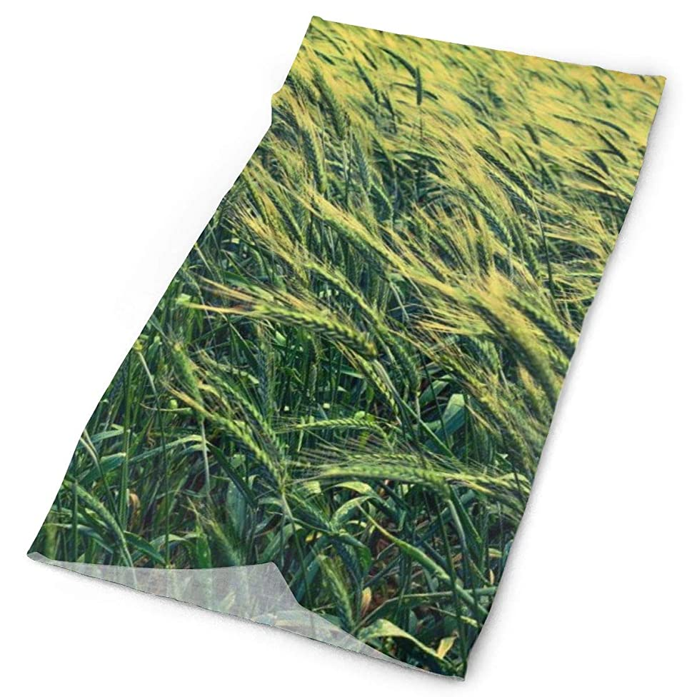 Green Grass Barley Cereals Field Unisex Fashion Quick-Drying Microfiber Headdress Outdoor Magic Scarf Neck Neck Scarf Hooded Scarf Super Soft Handle