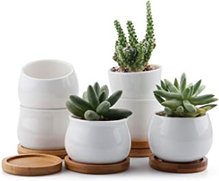 Best succulents in white pots Reviews