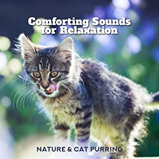 Comforting Sounds for Relaxation - Nature & Cat Purring
