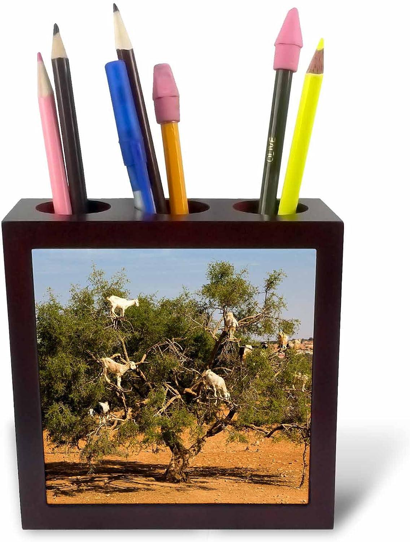 3dRosa 225013 _ PH-5   Marokko Essaouira-Argan tree-climbing Ziegen-Baum-Platte Ziegen-Baum-Platte Ziegen-Baum-Platte mit Halter B01IICL9YW | Verkauf  3047f9