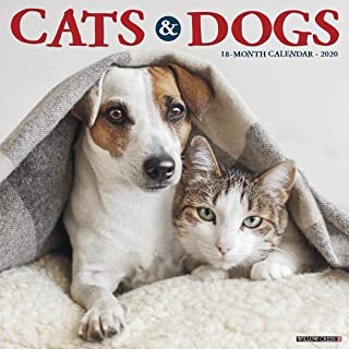 Best dog and cat calendar Reviews