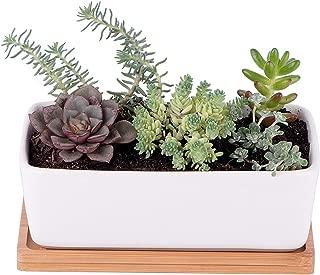 Seed Starter Mix Succulent & Cactus Growing Kit. Complete Indoors Set - Grow Succulents & Cacti Plants From Seeds, Planting Pots Tray, Organic Soil Gardening Guide. Indoor DIY Garden Gifts Men & Women