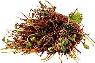 10 گیاه توت فرنگی Everweeting Everweet - (بسته 10 ریشه لخت با قیمت 9.95 دلار) Organic Grown USA. منطقه 4-9.